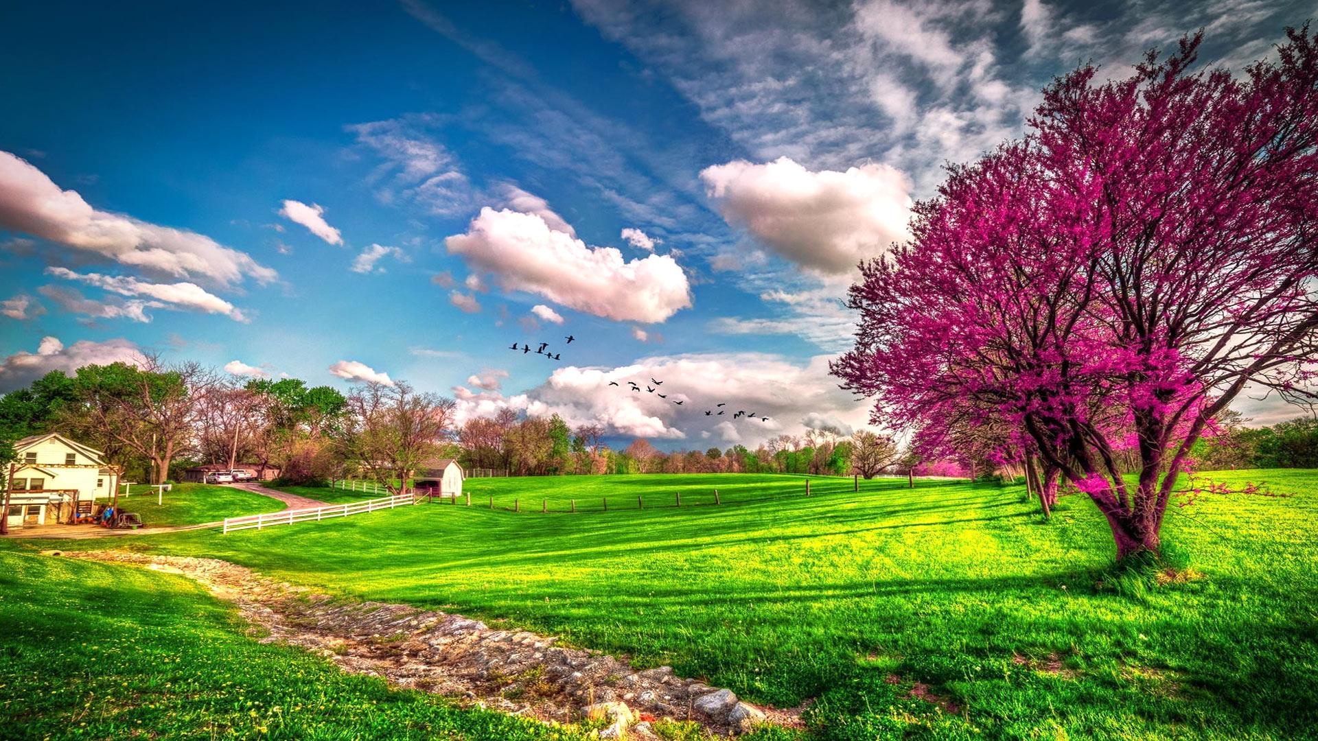 beautiful scenery wallpaper for - photo #43