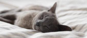 Creating A Sleep Space For Autumn