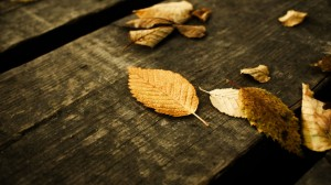 autumn-tree-wallpaper-31313-hd-wallpapers