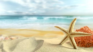 beautiful-starfish-beach-background-wallpaper-hd
