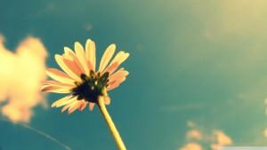 summer-flower-retro-sunshine_728162