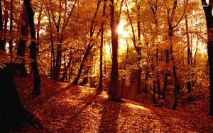 13285-autumn-forest-1920x1200-nature-wallpaper