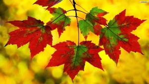 autumn-leaves-wallpaper