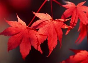 nature leaves spring season macro 2950x2094 wallpaper_wallpaperswa.com_22