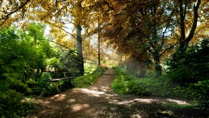 nature-beautiful-park-backgrounds-wallpapers