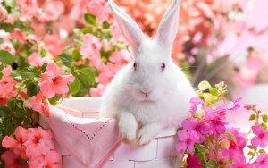 Rabbit-Spring-Wallpaper