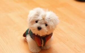 cute-dog-pics-of-puppies-wallpaper