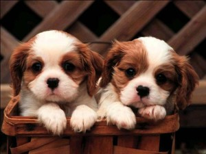 cute-puppies-pictures