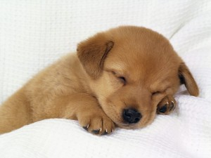 dogs-and-puppies-wallpaper-download
