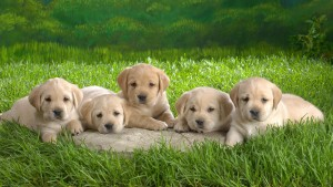 pictures-of-baby-puppies-and-wallpaper-21