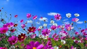 posh-spring-wallpaper-free-downloads-1366x768px-free-spring