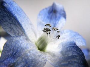 153-flower-macro-wallpaper-hd