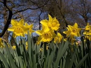 Yellow Flower Garden Spring Wallpaper