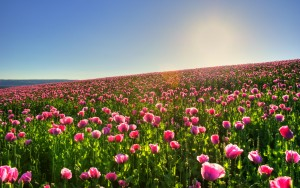amazing-spring-meadow-wallpaper-1