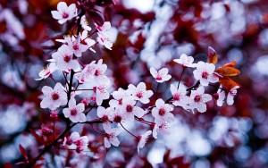 flowers-hd-wallpaper-free-download-169