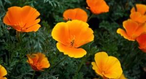 flowers-hd-wallpaper-free-download-183