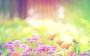 spring-flower-bumblebee-1920x1200