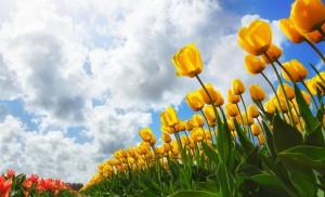 spring-wallpaper-2560x1600