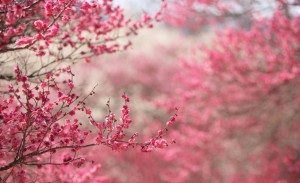 spring_signs_2-wallpaper-2560x1600
