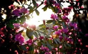 spring_sunshine_4-wallpaper-2560x1600