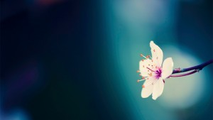 Spring Flowers Background d