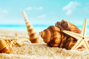 11932_Macro-summer-wallpaper-big-shells-on-the-beach