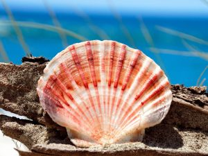 sea-shell-on-pakiri-beach_90629-1600x1200