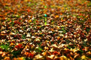 Amazing_Nice_Autumn_Leaves_Wallpapers_Free_Download