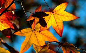 Autumn-Leaves-Desktop-Wallpapers