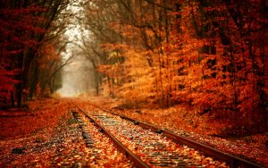 Autumn-Leavs-HD-Wallpapers
