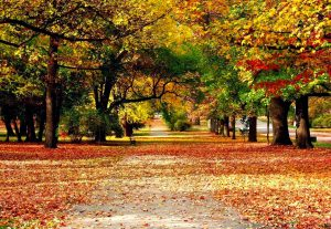 Autumn-Wallpaper-Full-HD-Free-Download-Desktop-Wallpaperxyz-dot-Com-38