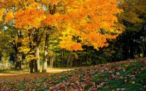 Autumn-Wallpaper-Full-HD-Free-Download-Desktop-Wallpaperxyz-dot-Com-39