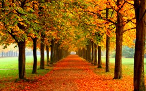 autumn-free-wallpaper-autumn-colors_2560x1600_93076