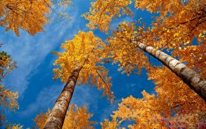autumn-trees_9223.jpg