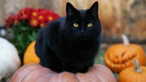 black-cat-halloween-pumpkins-jack