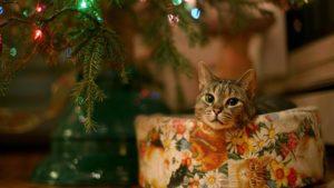 cat-under-christmas-tree-wide-wallpaper-16111