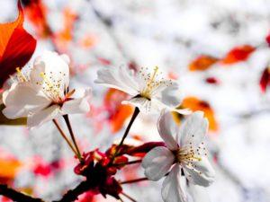 6989741-april-spring-flowers