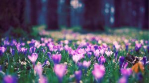 _downloadfiles_wallpapers_2560_1440_spring_flower_park_11518