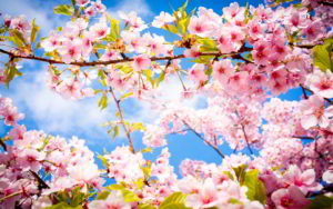flowers-spring-wallpaper-for-desktop