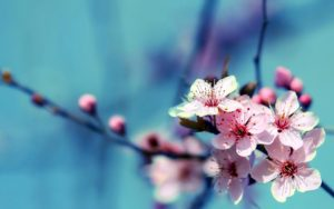 wallpaper-spring-005