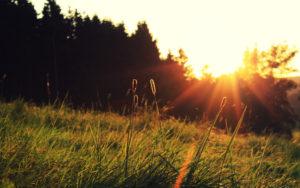 38722974-sunshine-wallpapers