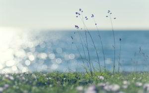 39617670-sunshine-wallpapers