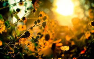 39840511-sunshine-wallpapers