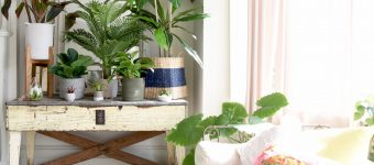Go green inside your space