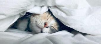 Embrace the cat-nap
